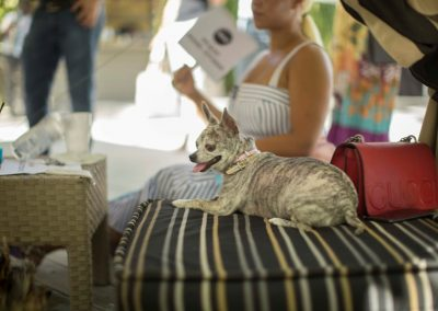 miami-model-citizens-doggies-divas-fashion-show-2017-53
